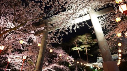Planes para 2021: Contemplar la primavera de Nikko
