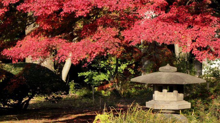 Tokio se viste de otoño para sorprender a sus visitantes