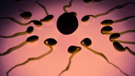 Lo que comes afecta a la calidad de los espermatozoides