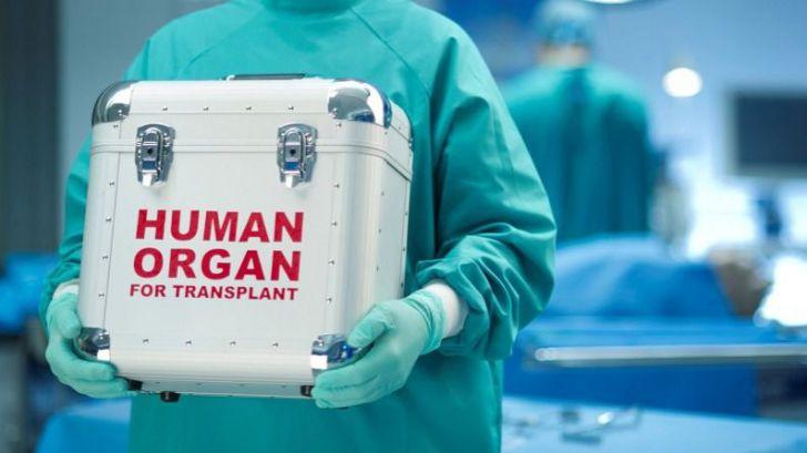 El 'indispensable' papel del juez en el proceso de las donaciones de vivo