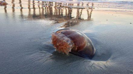 ¿Qué hacer si me pica una medusa en la playa este verano?